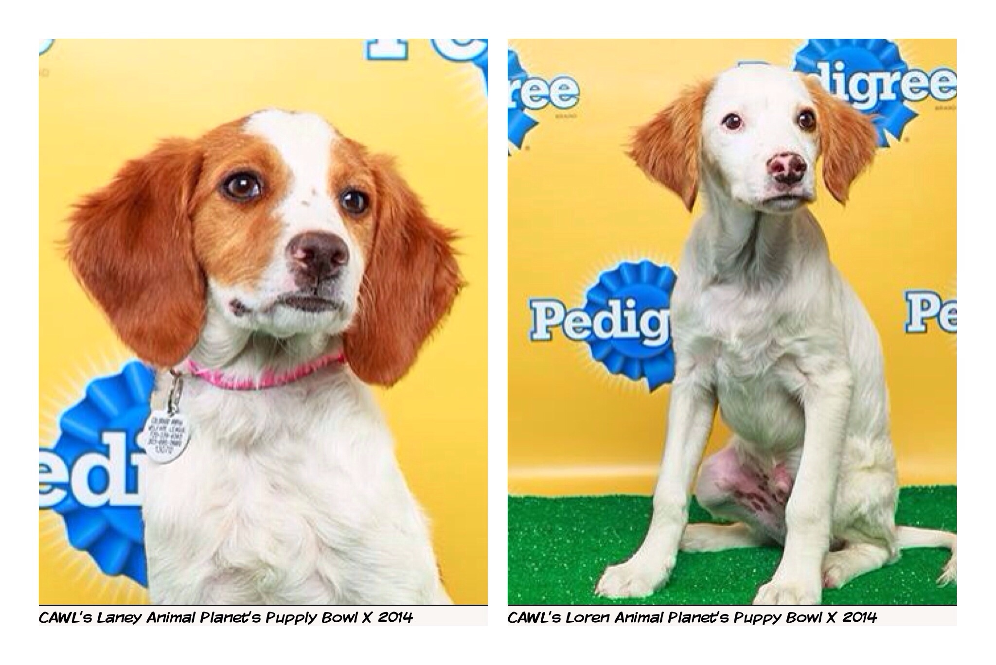 Laney and Loren in Puppy Bowl X